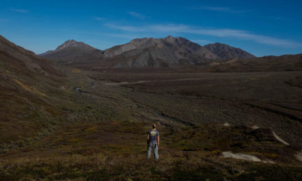 Hiking Denali National Park: What you need to know