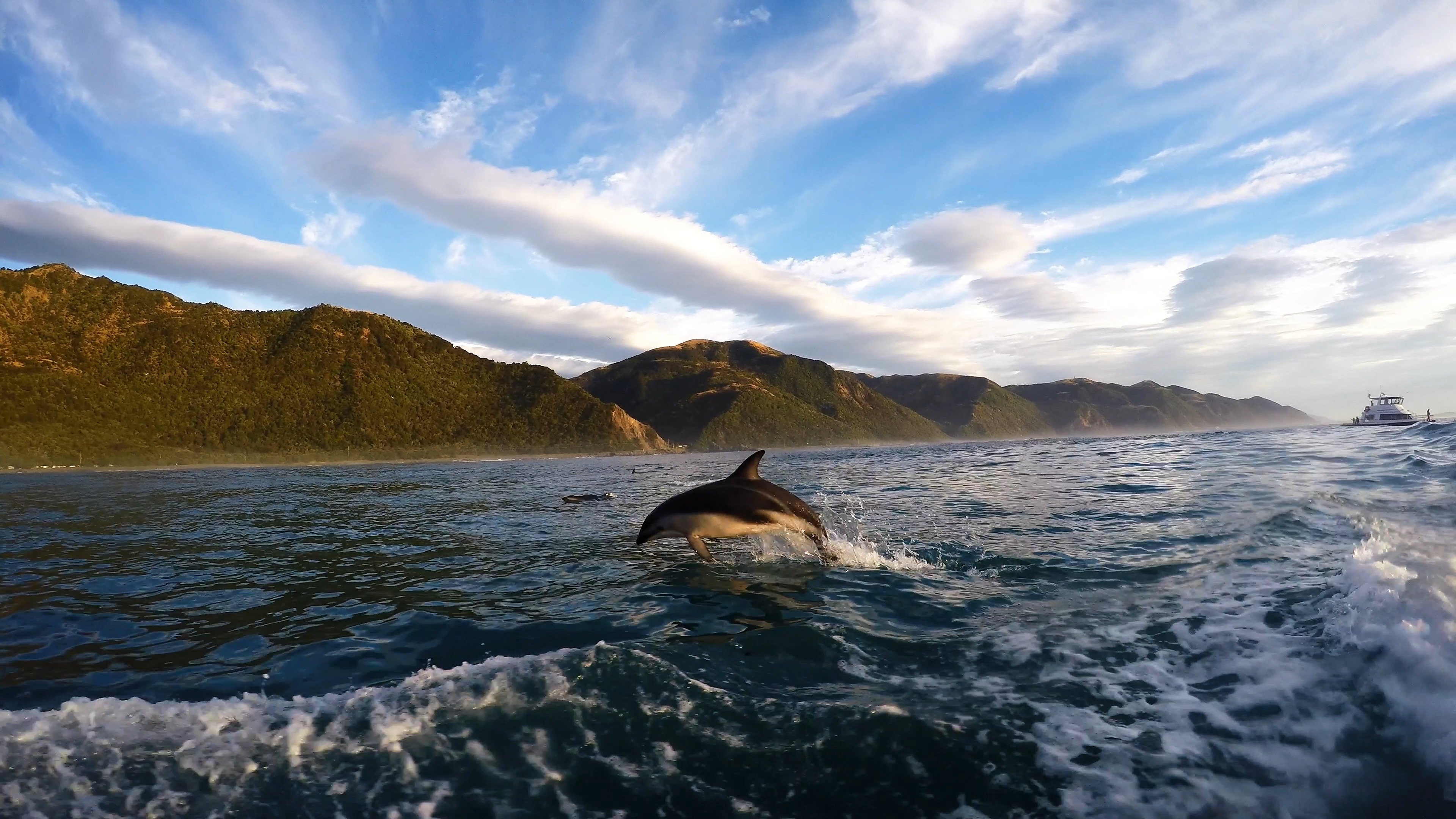 Swimming with wild dolphins in Kaikoura