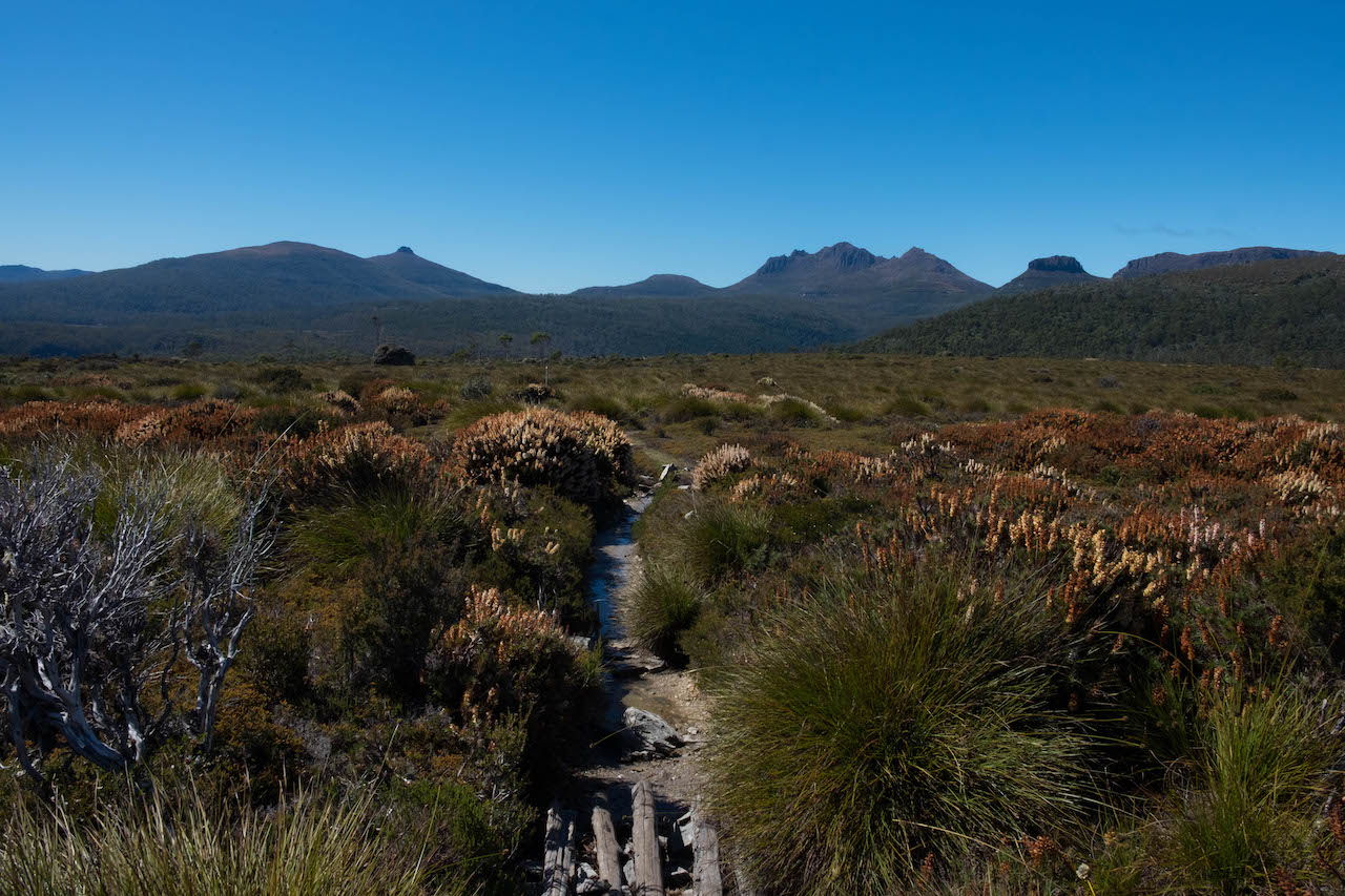 Hiking the overland track goes through button grass moorland